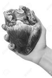 stewed heart