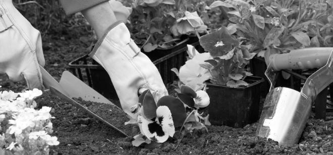 Gardening+(1)